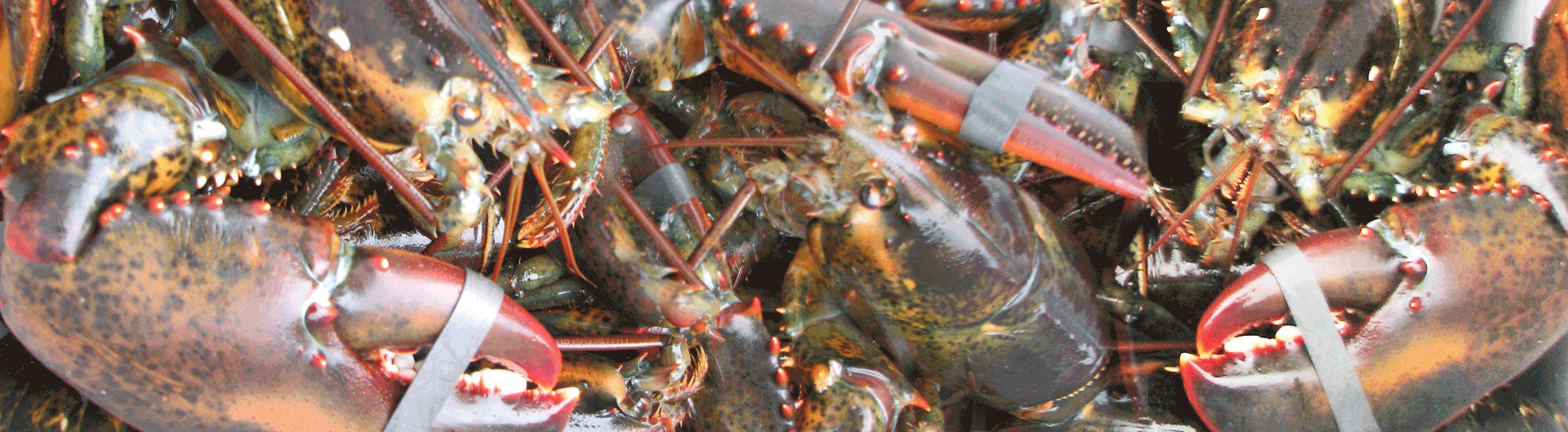 Coldwater Seafood Market Smokehouse Fresh Seafood Lobsters Smoked Mussels